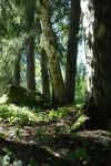 Jos metsään haluat mennä nyt, niin takuulla yllätyt. Kokous saa uuden käänteen, kun ammennat ideoita lähiluonnosta!