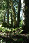 Vain muutama askel Karhunpesän terassilta, ja metsämaisema on siinä. Kuva: Tia Yliskylä