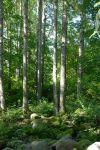 Astu luontoon! Inkalan Kartano tarjoaa luontoelämyksen lähellä, kartanon takapihalla. Kuva: Tia Yliskylä